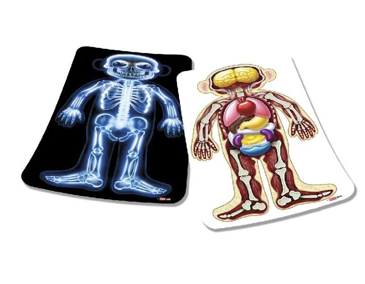 Images de l 39 int rieur du corps humain scolart for Interieur corps humain
